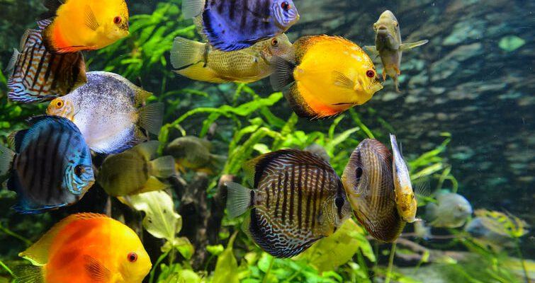 jakie oświetlenie do akwarium